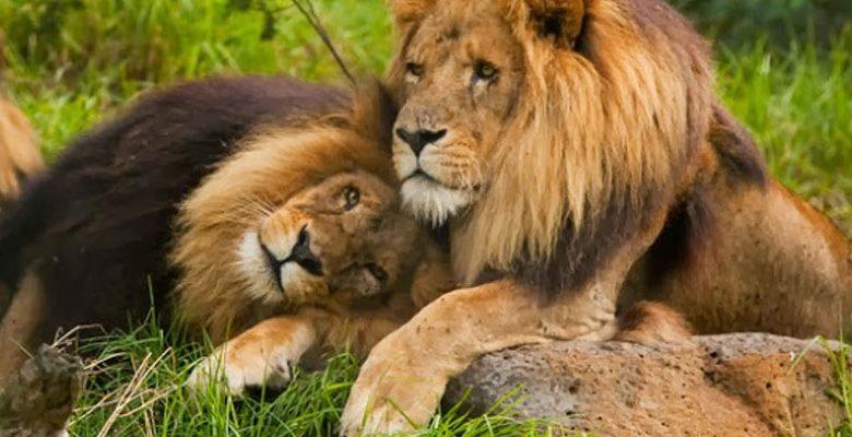 Eşcinsel Hayvanlar