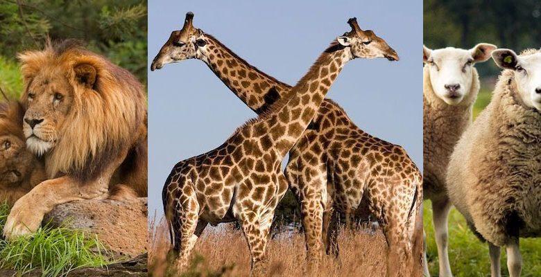 Hayvanlarda Eşcinsellik